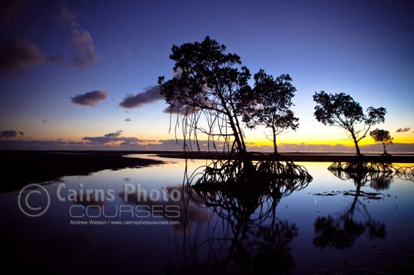 Image of mangroves silhouetted at dawn, Port Douglas, North Queensland, Australia