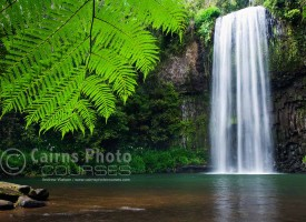 Image of tropical fern at Millaa Millaa Falls, North Queensland, Australia