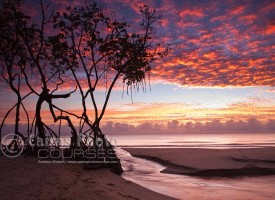 Image of dawn over mangroves and Coral Sea, Cairns, North Queensland, Australia