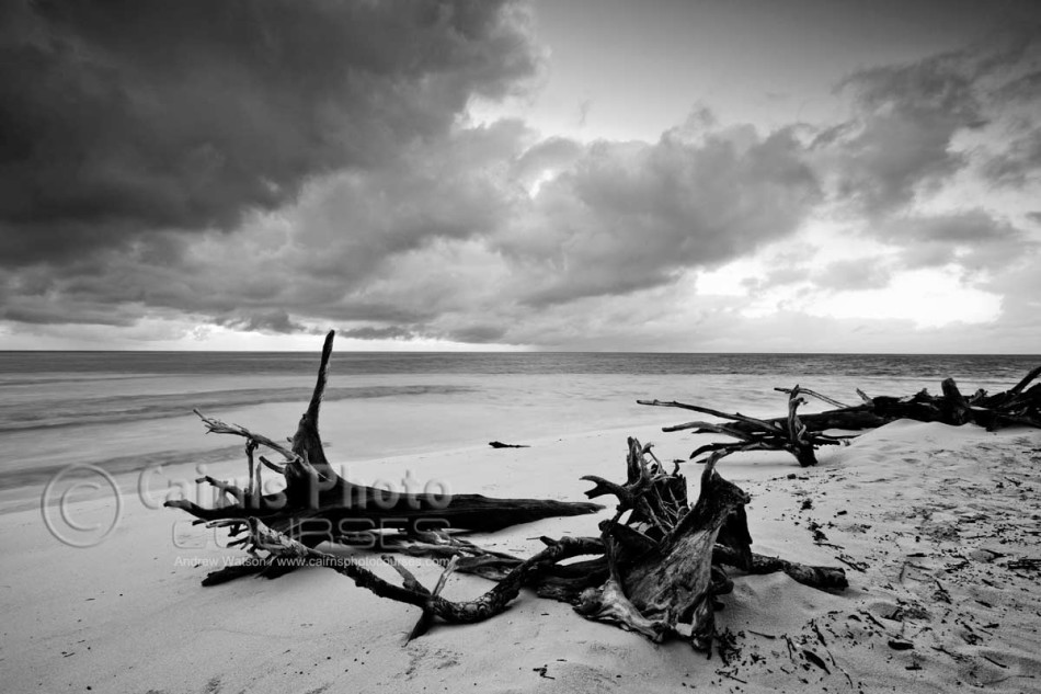 Image of driftwood on shore of Green Island, Great Barrier Reef, Cairns, North Queensland, Australia