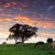 Image of cows grazing in pastures at dawn, Millaa Millaa, Atherton Tablelands, North Queensland, Australia