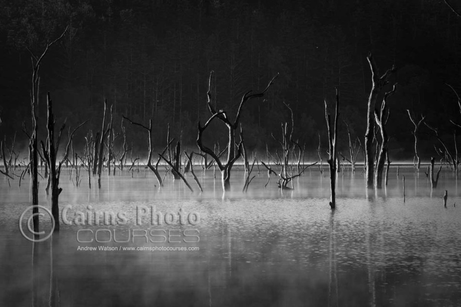 Image of dead trees rising out of Lake Tinaroo, Atherton Tablelands, North Queensland, Australia