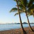 Image of coconut palms at Palm Cove, Cairns, North Queensland, Australia