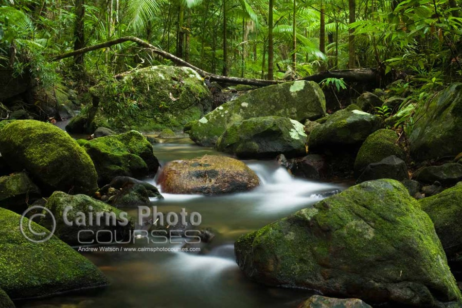 Image of rainforest creek at Mossman Gorge, Daintree National Park, North Queensland, Australia
