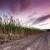 Image of cane fields at dawn near Mossman, North Queensland, Australia
