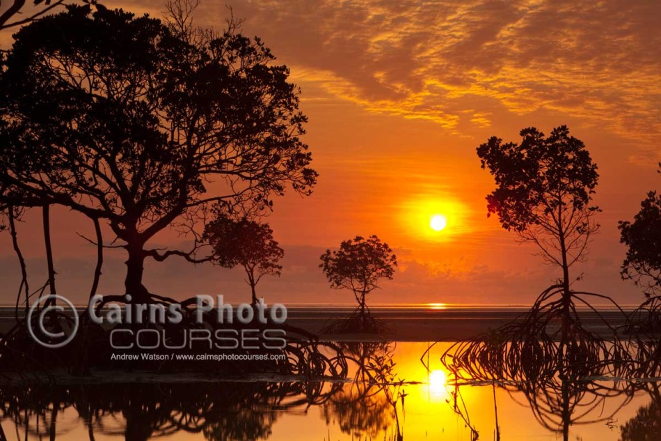 Image of sun rising over coastal mangroves, Port Douglas, North Queensland, Australia