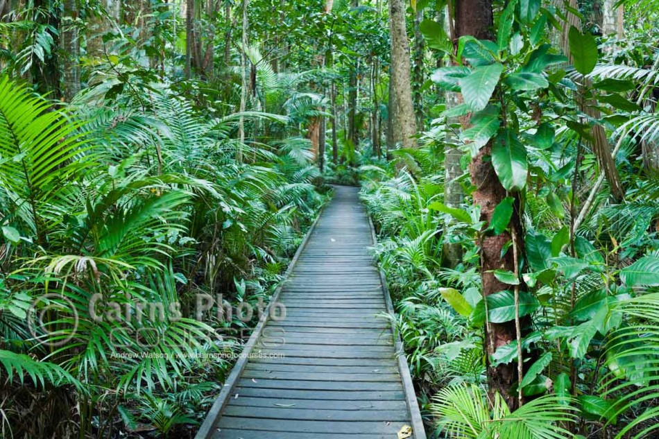 Image of rainforest path in Botanic Gardens, Cairns, North Queensland, Australia