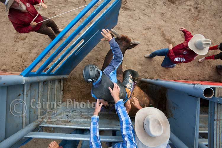 Overhead shot of bull rider in bucking chute.  Canon 16-35mm lens @ 17mm, f8 @ 1/400 sec, ISO 500