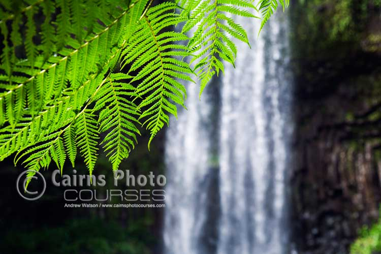 Using a large aperture to isolate fern leaf from background.  Canon 5D, Tripod, 64mm, ISO 400, f5.6 @ 1/160 sec