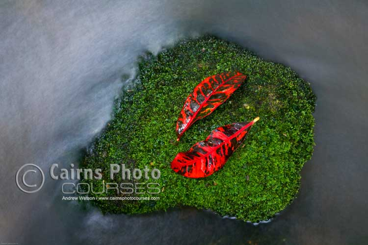 Colourful rainforest detail with long exposure for water.  Canon 5D, Tripod, 58mm, ISO 100, f16 @ 10 sec