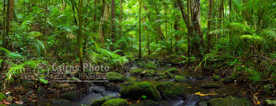 Long exposure and polarising filter to reduce glare on leaves.  Stitched pano, Canon 5D, Tripod, 50mm, ISO 100, f11 @ 10 sec