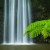Photograph of waterfall and tropical fern at Millaa Millaa Falls